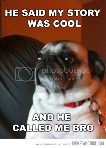 [Image: funny-dog-cool-story-bro.jpg]